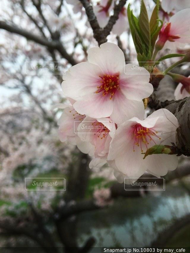 自然の写真・画像素材[10803]