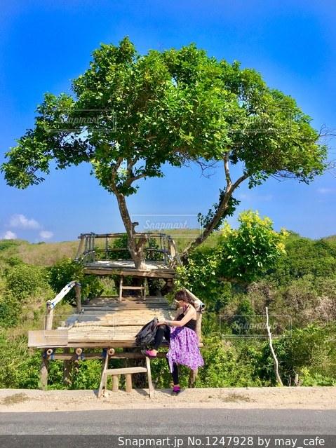 木の前のベンチに座っている人の写真・画像素材[1247928]