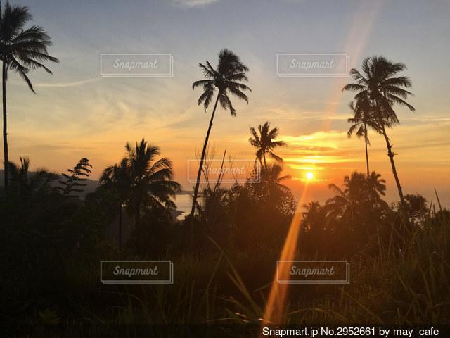 夕日の前にあるヤシの木の写真・画像素材[2952661]
