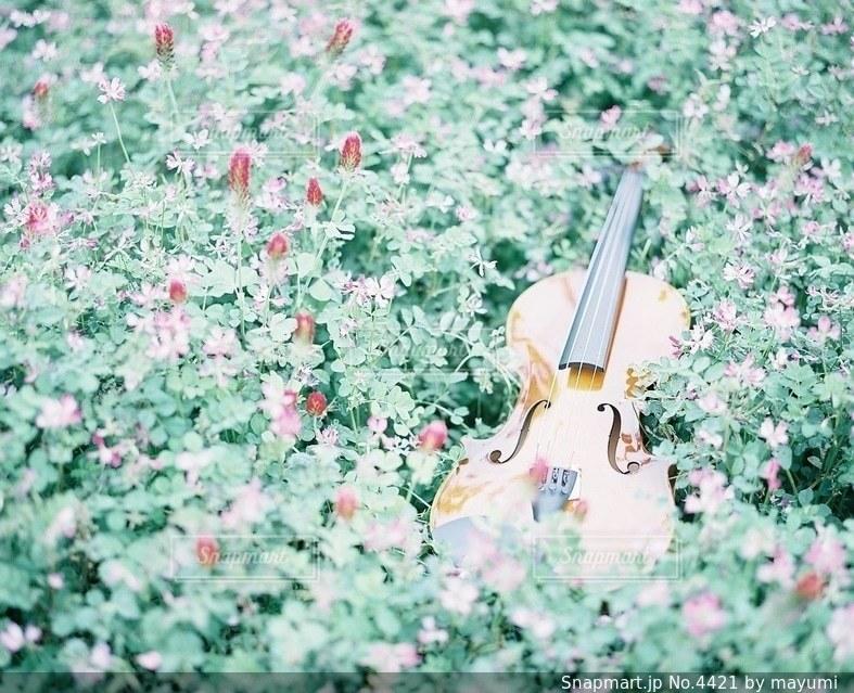 花の写真・画像素材[4421]