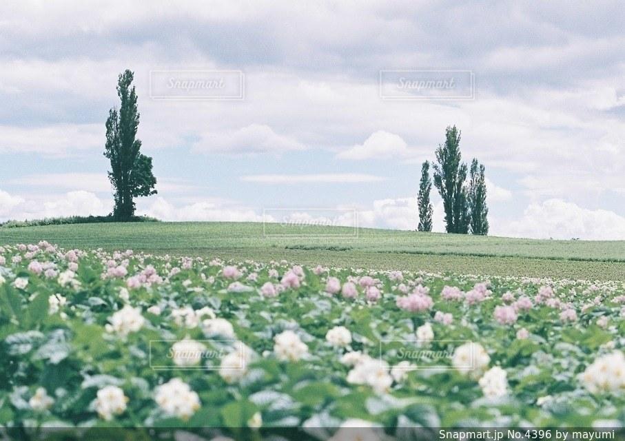風景の写真・画像素材[4396]