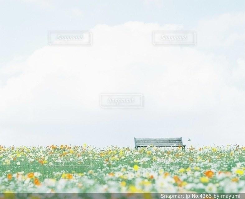 風景の写真・画像素材[4365]