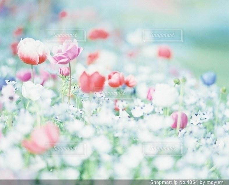 花の写真・画像素材[4364]