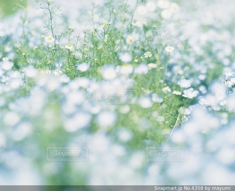 風景の写真・画像素材[4358]
