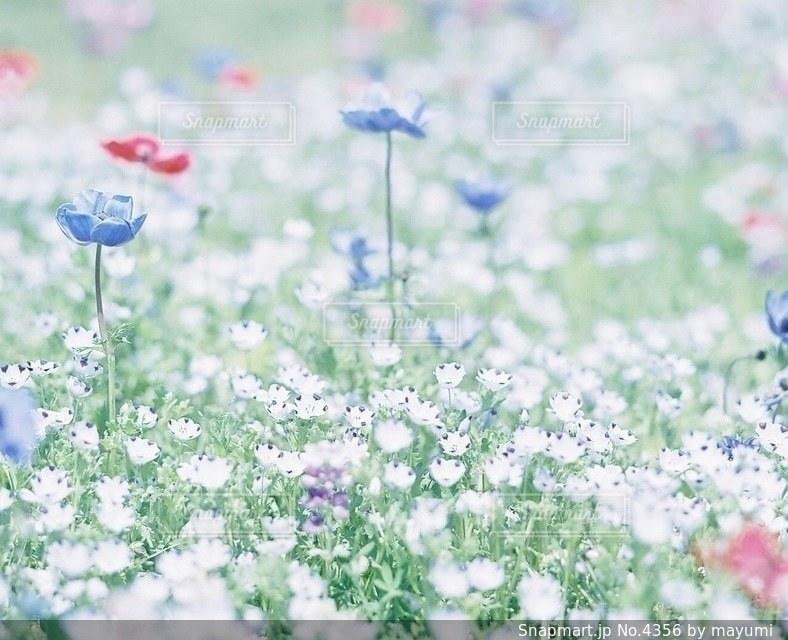 花の写真・画像素材[4356]
