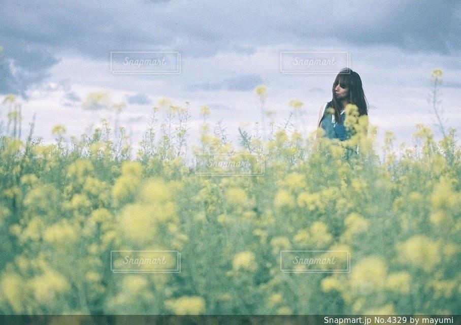 女性の写真・画像素材[4329]
