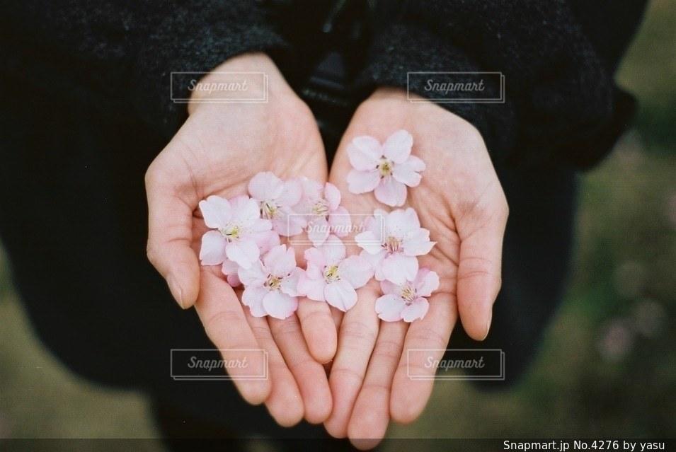 花の写真・画像素材[4276]
