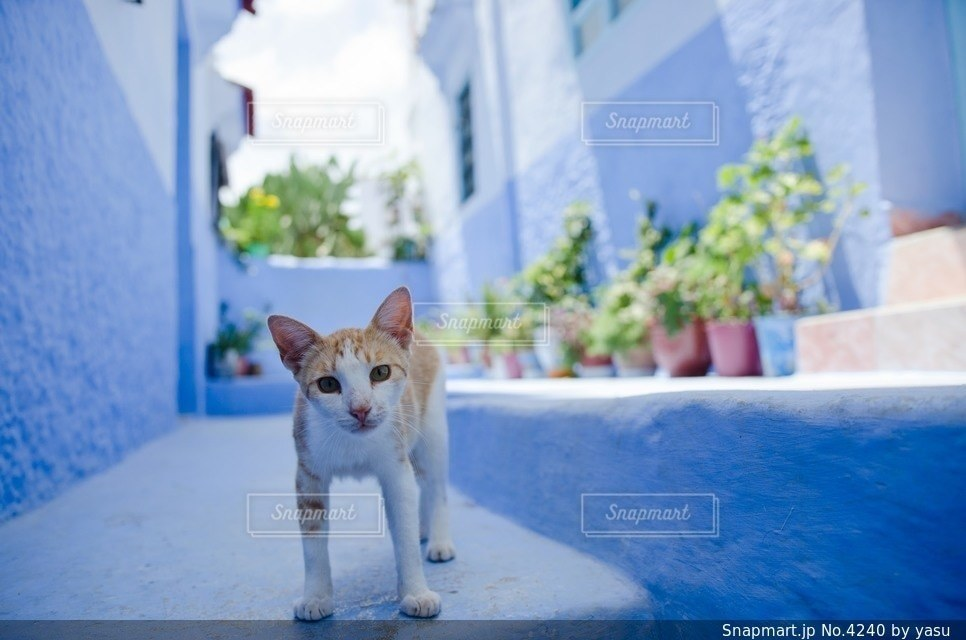 猫の写真・画像素材[4240]
