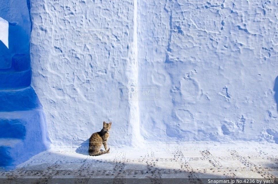 猫の写真・画像素材[4236]