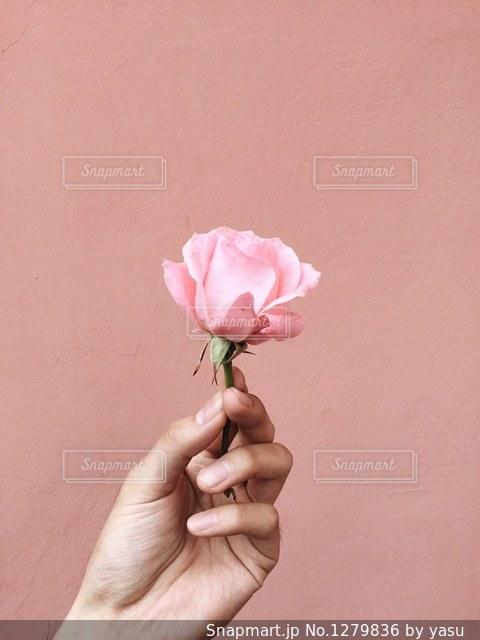 花を持っている手の写真・画像素材[1279836]