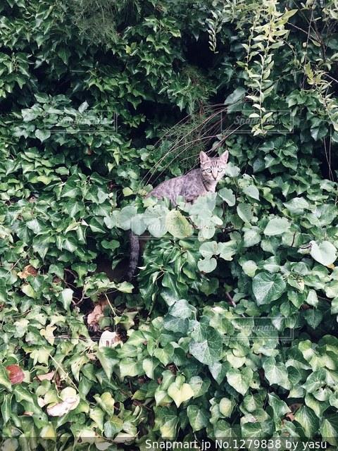 緑の葉の木の写真・画像素材[1279838]