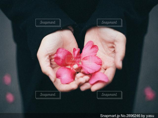 ピンクの花を持つ手の写真・画像素材[2896246]