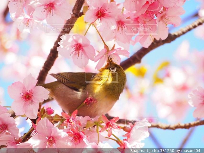 自然の写真・画像素材[381250]