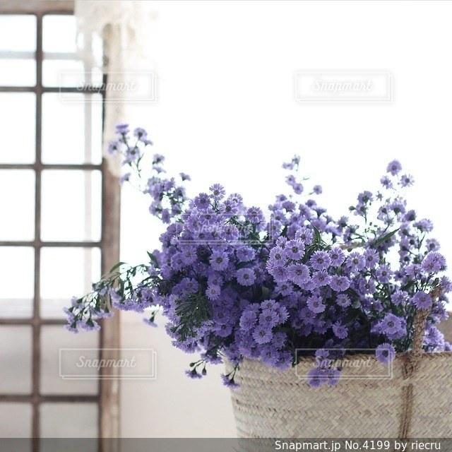 植物の写真・画像素材[4199]