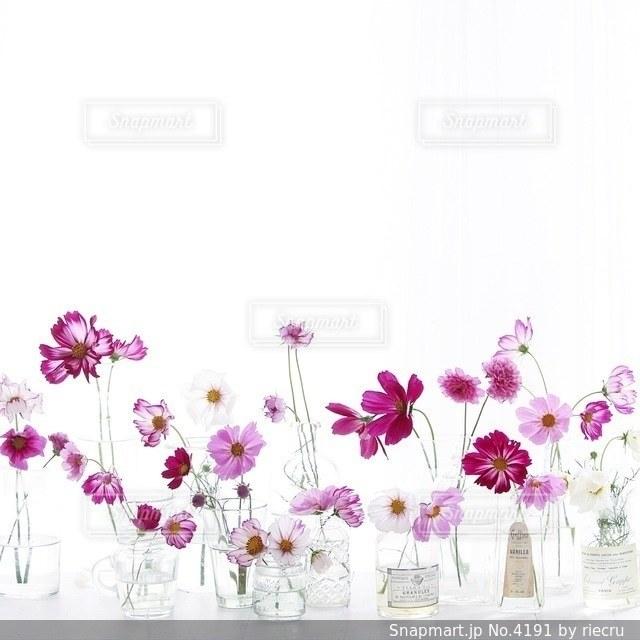 花の写真・画像素材[4191]