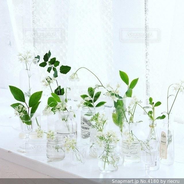 植物の写真・画像素材[4180]