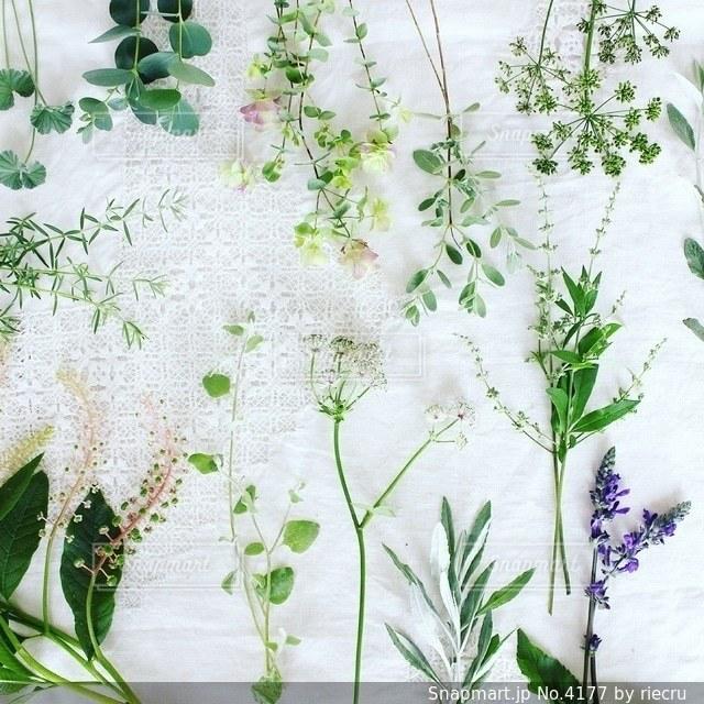 植物の写真・画像素材[4177]