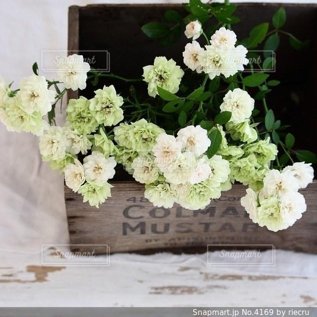 花の写真・画像素材[4169]