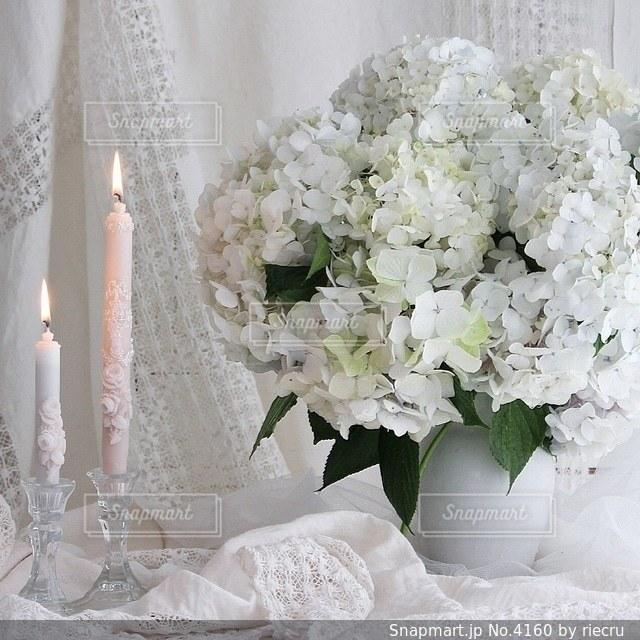 花の写真・画像素材[4160]