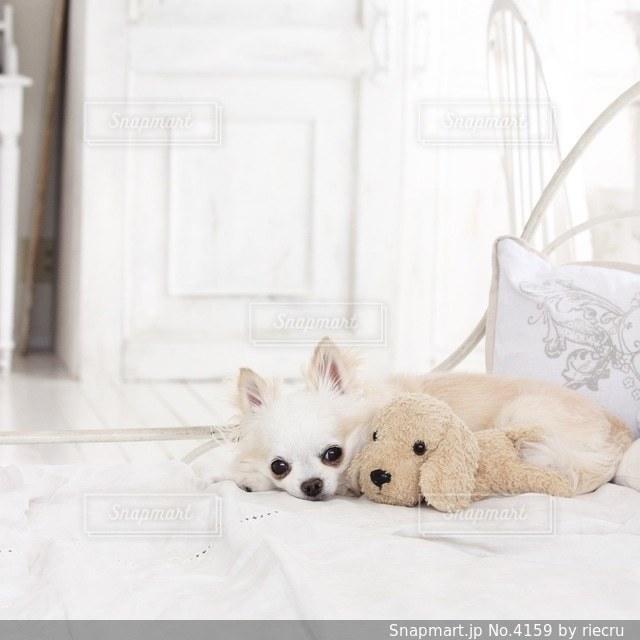 犬の写真・画像素材[4159]