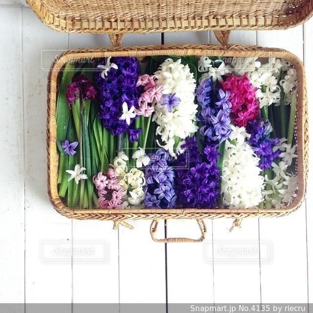 花の写真・画像素材[4135]