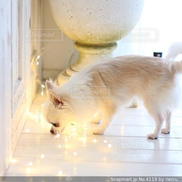 犬の写真・画像素材[4119]