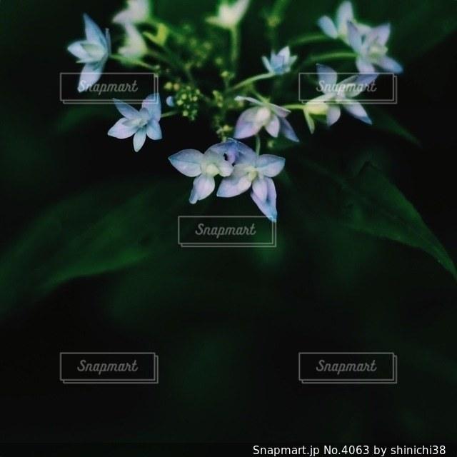 花の写真・画像素材[4063]