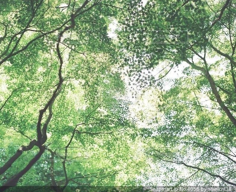風景の写真・画像素材[4056]