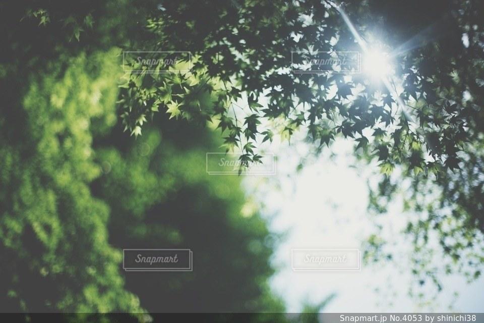 風景の写真・画像素材[4053]
