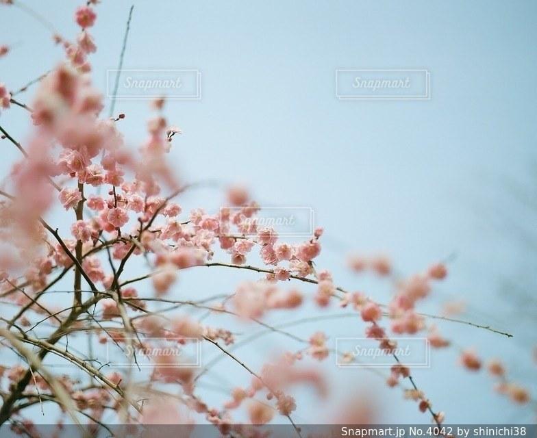 風景の写真・画像素材[4042]
