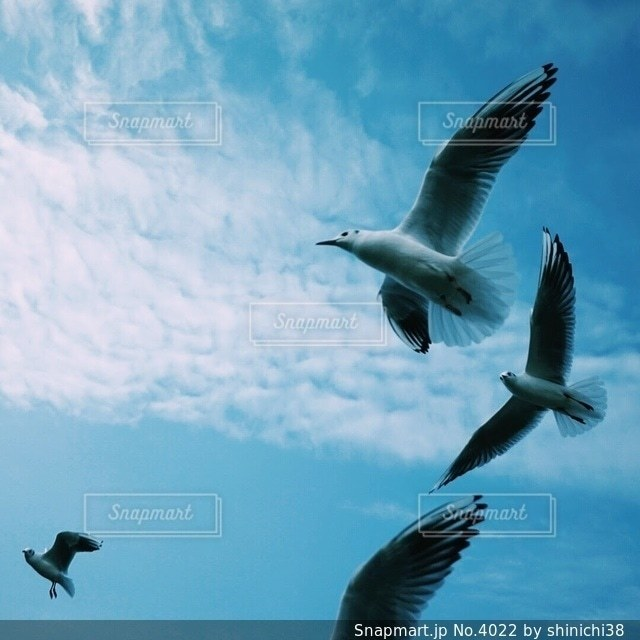 空の写真・画像素材[4022]