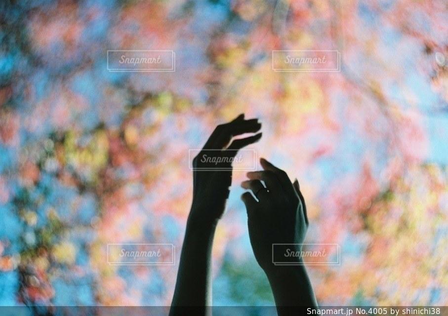 秋の写真・画像素材[4005]