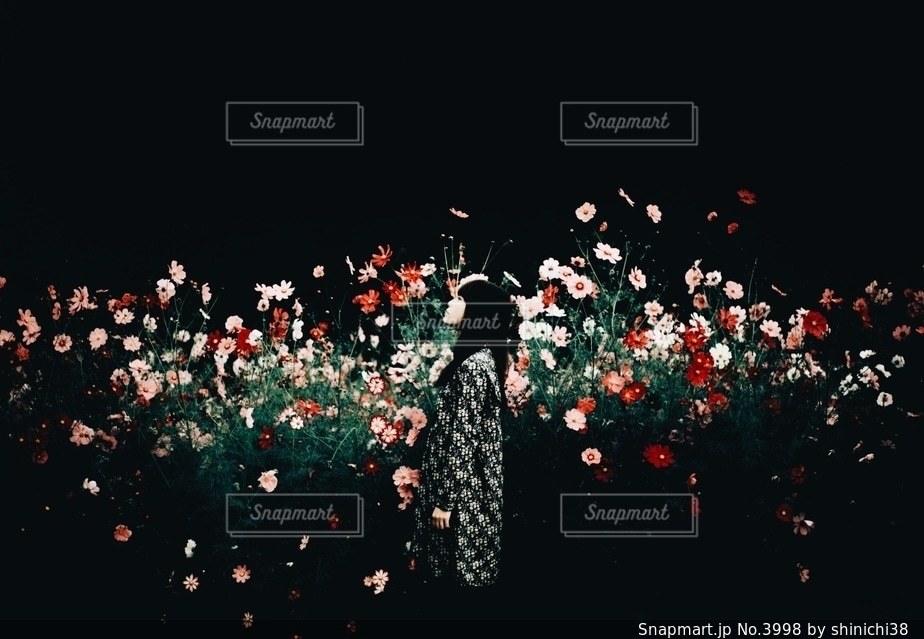 秋の暗闇の写真・画像素材[3998]
