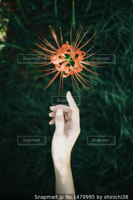 黒傘を持つ手の写真・画像素材[1479995]