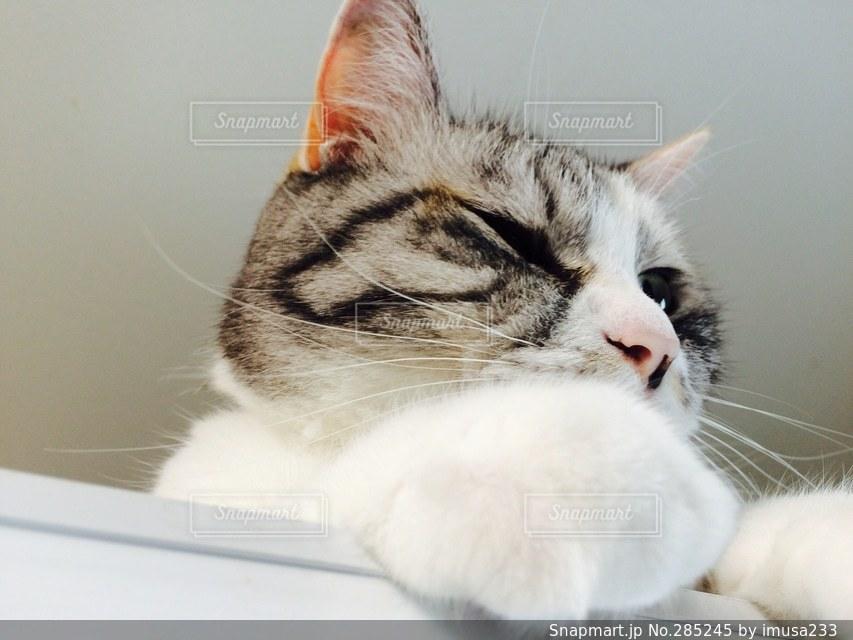 猫の写真・画像素材[285245]
