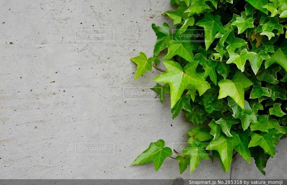 自然の写真・画像素材[285318]