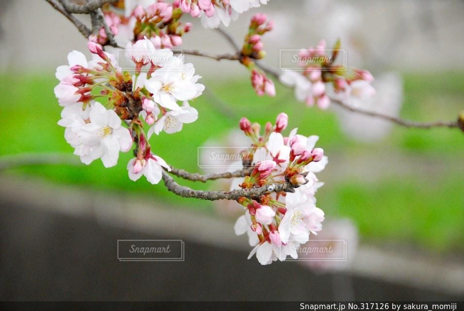 自然の写真・画像素材[317126]