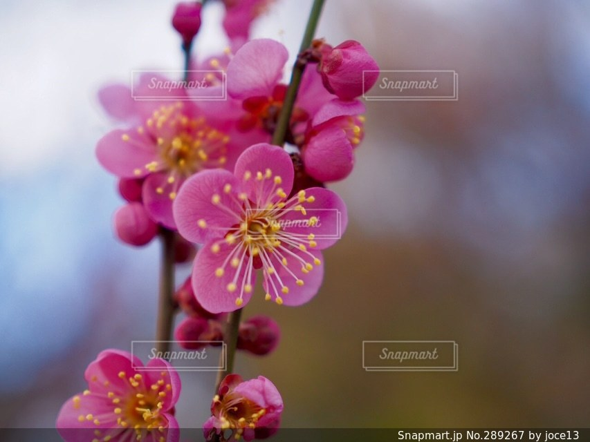 自然の写真・画像素材[289267]