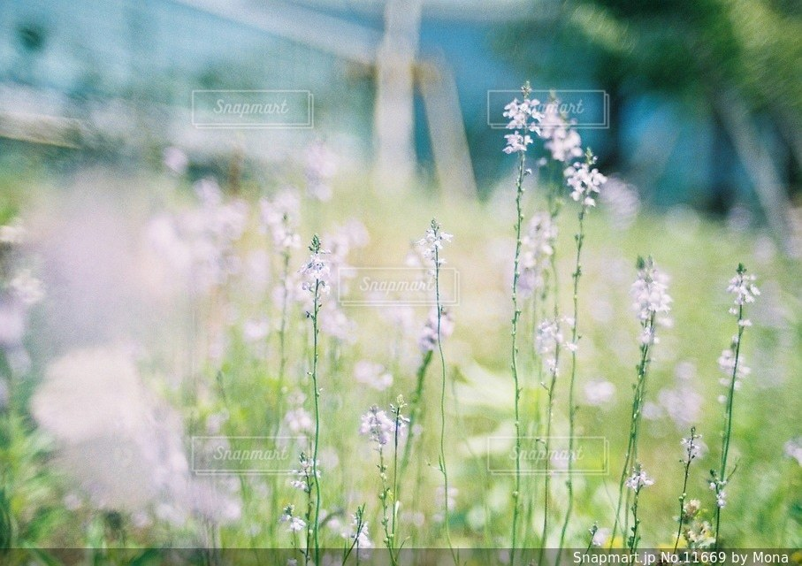 やさしく咲く花の写真・画像素材[11669]