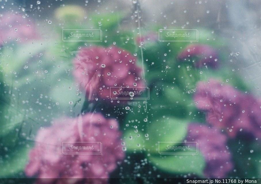 あじさいと傘の写真・画像素材[11768]