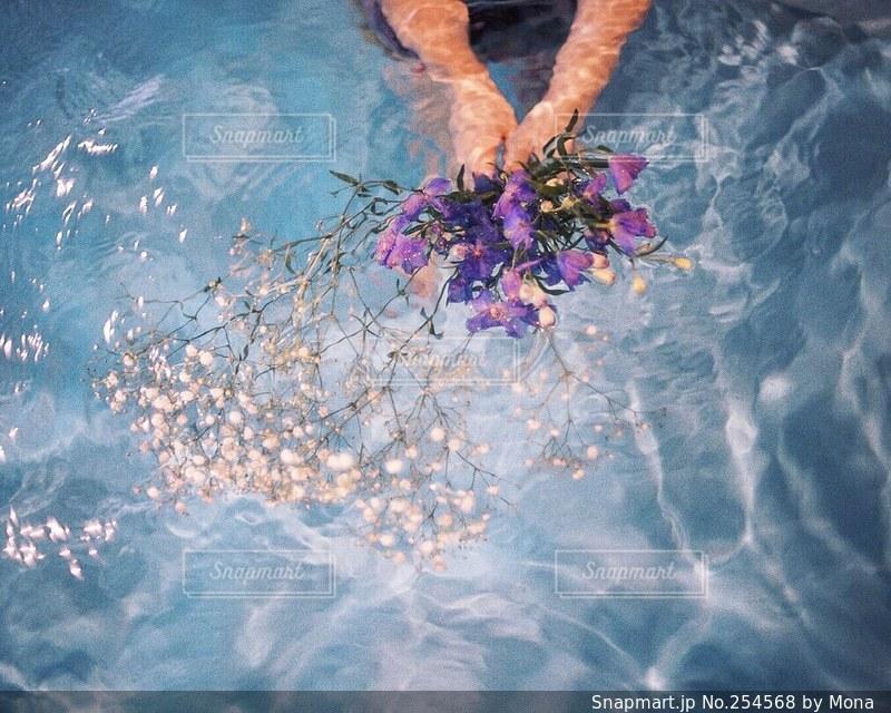 花の写真・画像素材[254568]