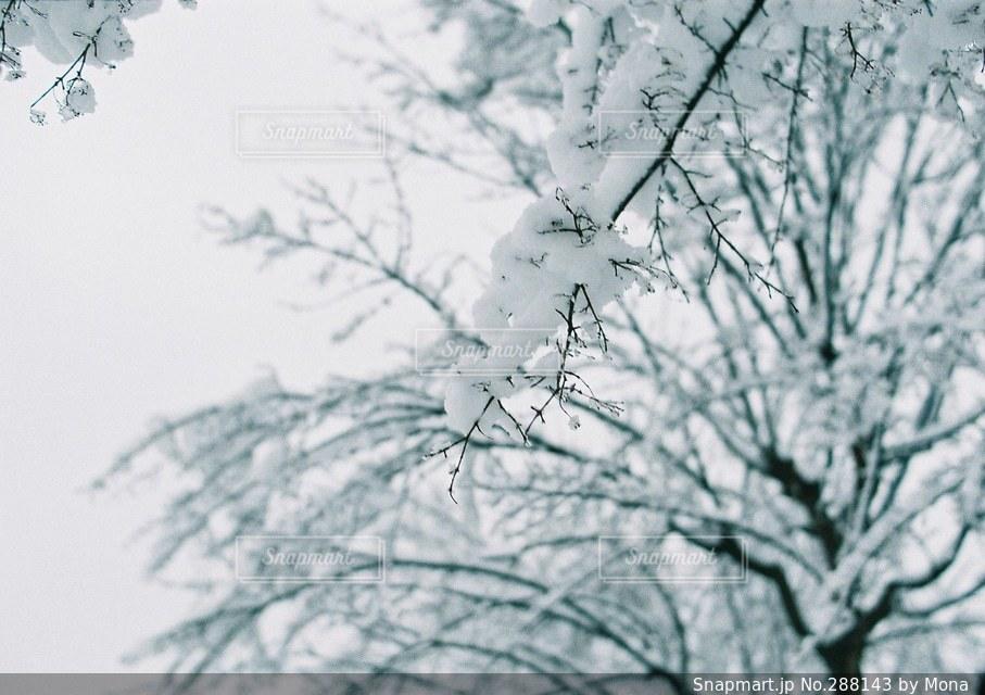 雪の日の写真・画像素材[288143]