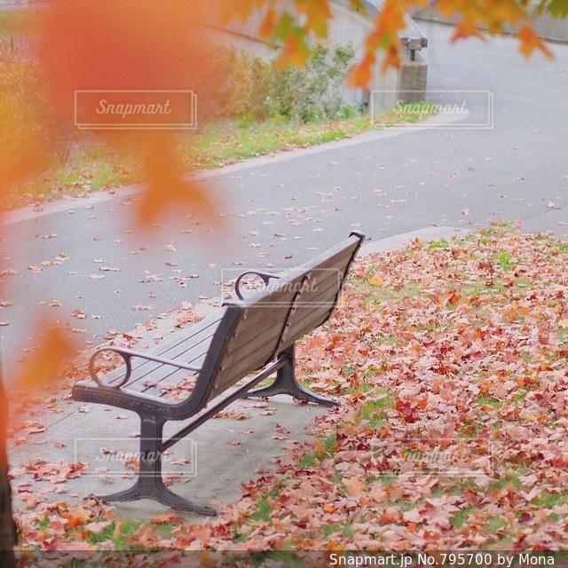 紅葉の写真・画像素材[795700]