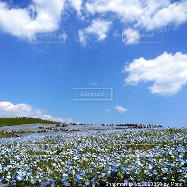 青の丘の写真・画像素材[1003868]