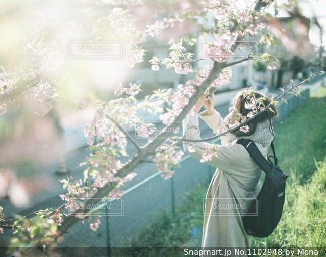 桜の写真を撮る女性の写真・画像素材[1102948]