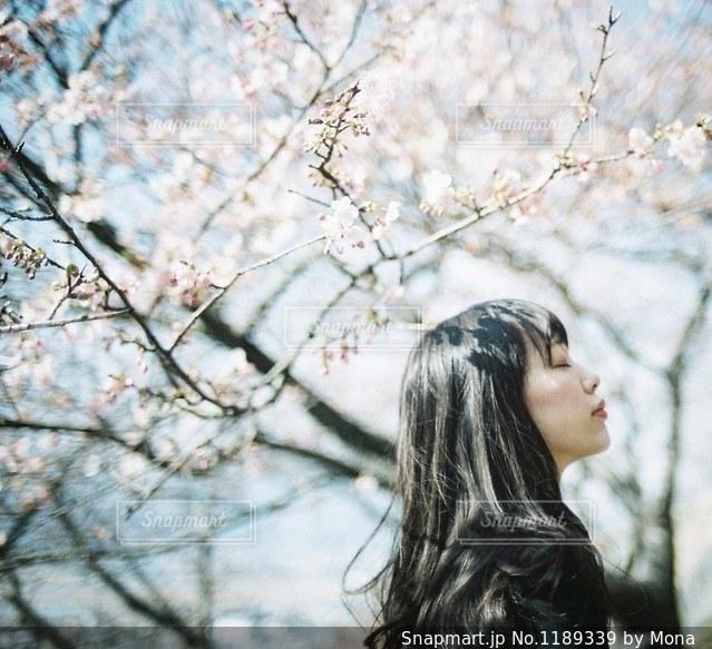 桜と女性の写真・画像素材[1189339]