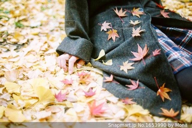 秋と女の子の写真・画像素材[1653990]