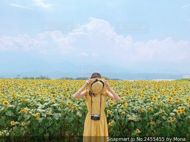 ひまわり畑と夏の写真・画像素材[2455455]