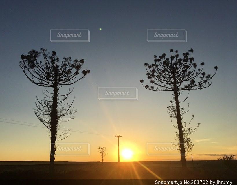 自然の写真・画像素材[281702]