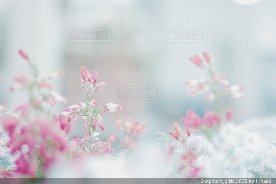 風景の写真・画像素材[3838]